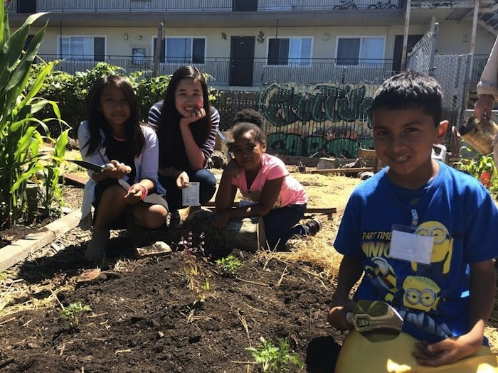 Planting tomatoes in our community plot