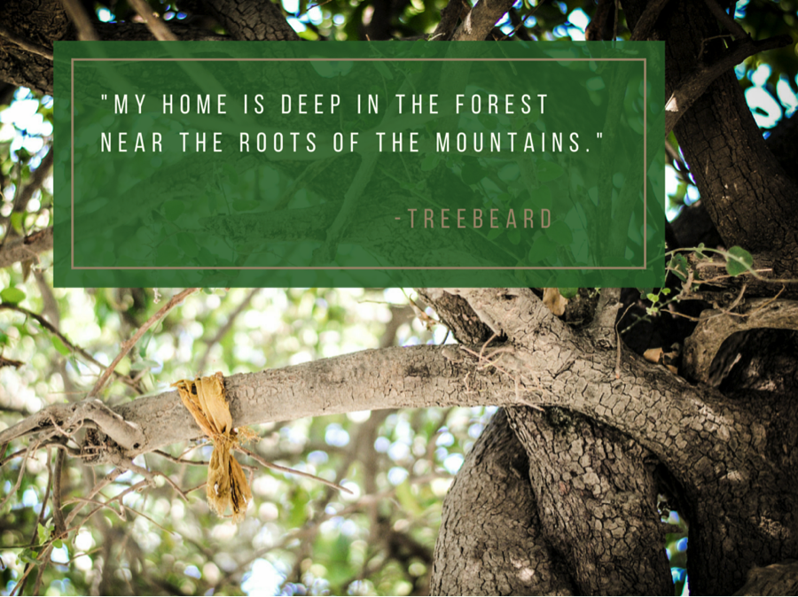 My Home Is Deep in the Forest